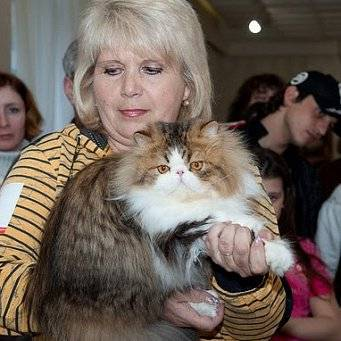 Выставки кошек: запись на выставку, распределение кошек по выставочным классам