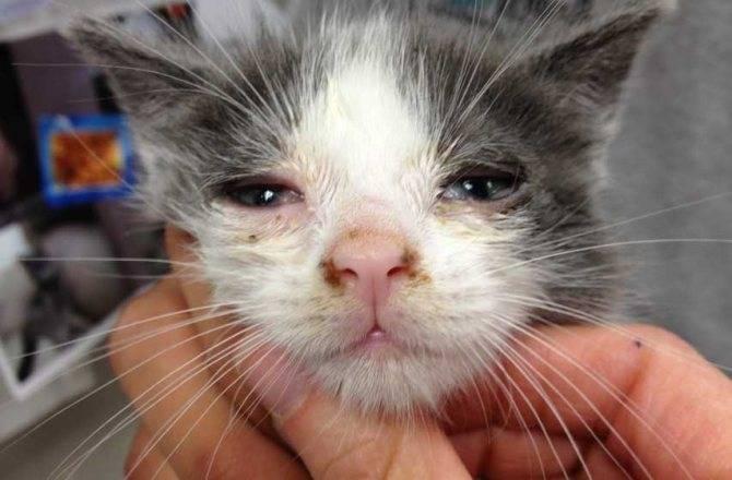 Почему у котов мокрый нос и что значит его сухость