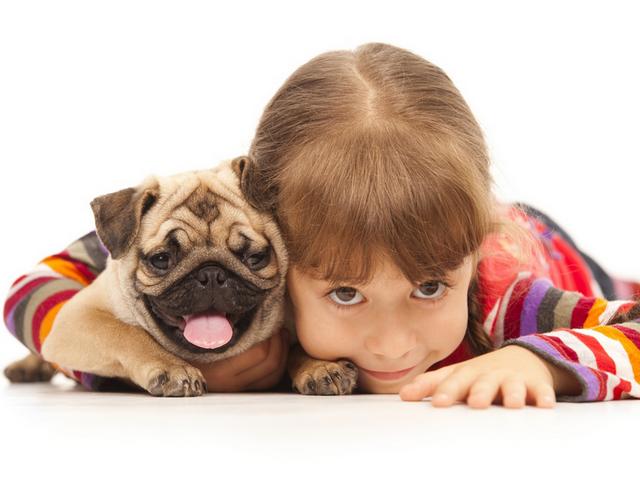 Заводить ли щенка до рождения ребенка?