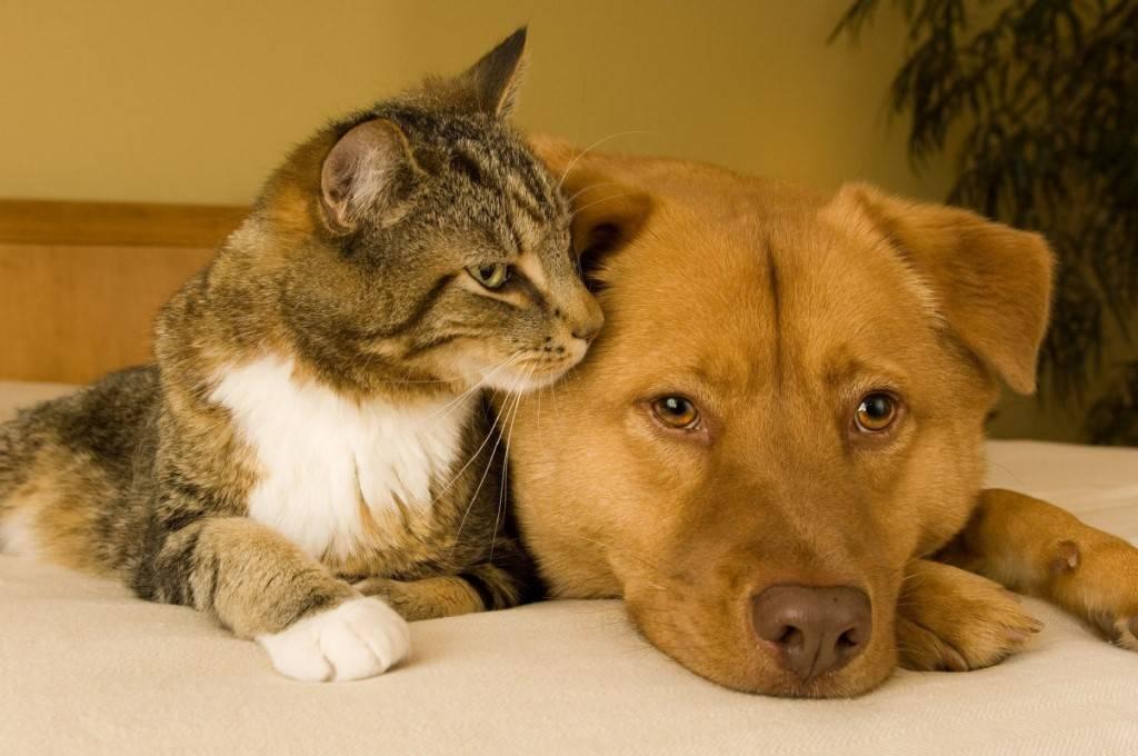 Как подружить двух котов в одной квартире? советы эксперта