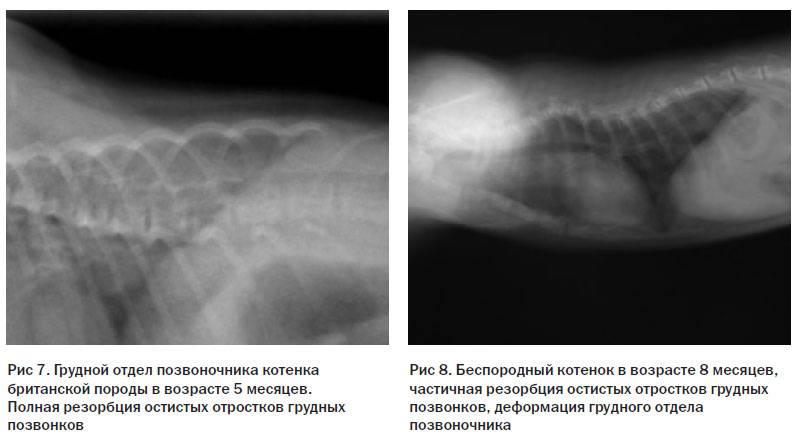 Гиперпаратиреоз у кошек — первичная и вторичная формы. причины, лечение, профилактика