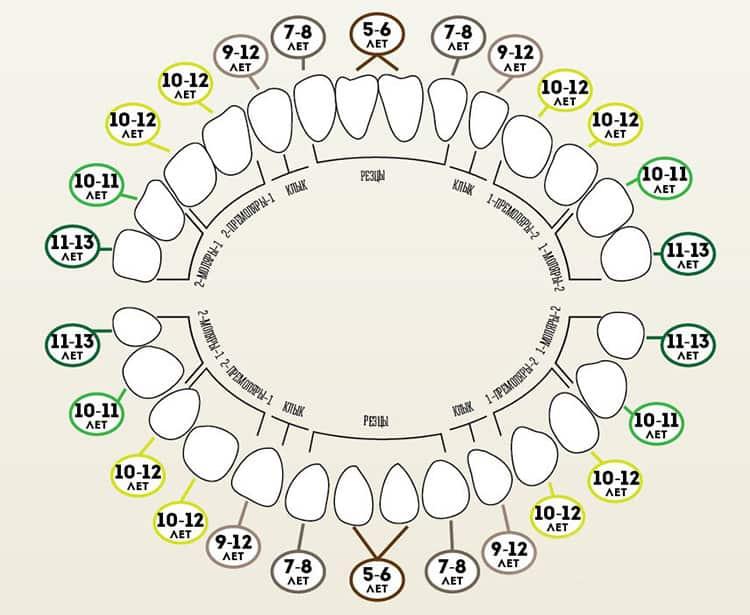 Когда меняются зубы у котят — особенности смены зубов у разных пород