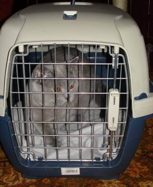 Перевозка кошек в автомобиле, в поезде, в самолете, за границу