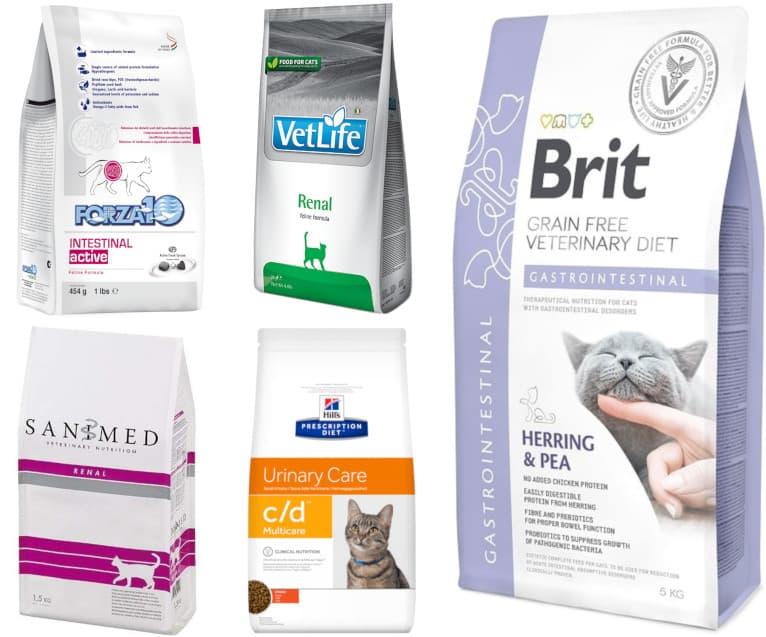 Чем лучше кормить котов и кошек: дельные рекомендации ветеринаров