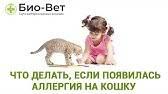Аллергия на кошек у детей: симптомы, что делать