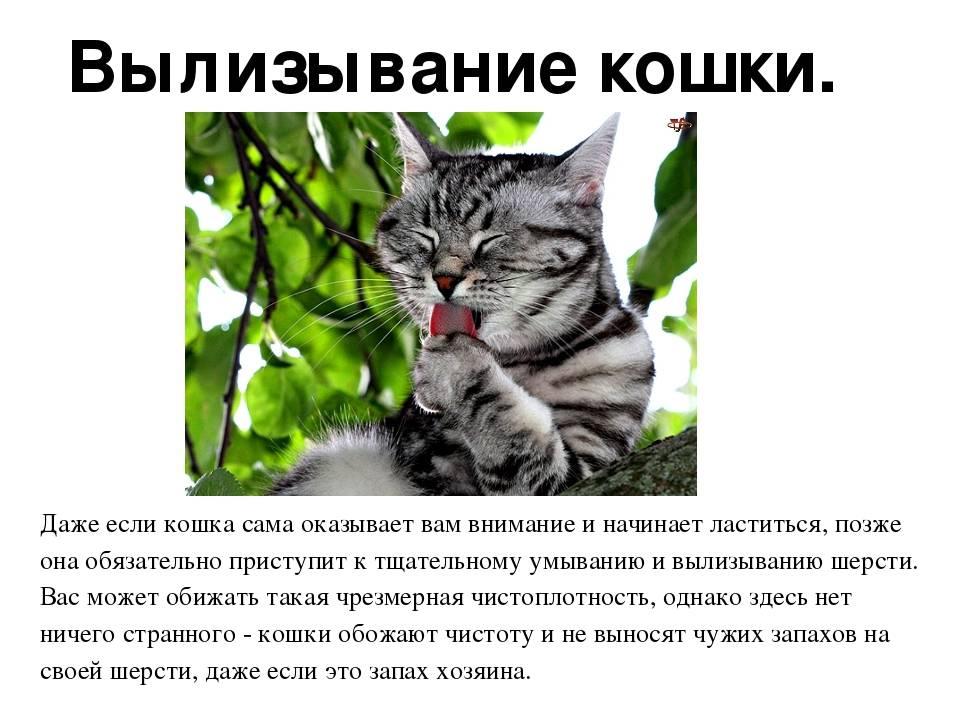 Повадки кошек: топтание, движения хвостом, мяуканье