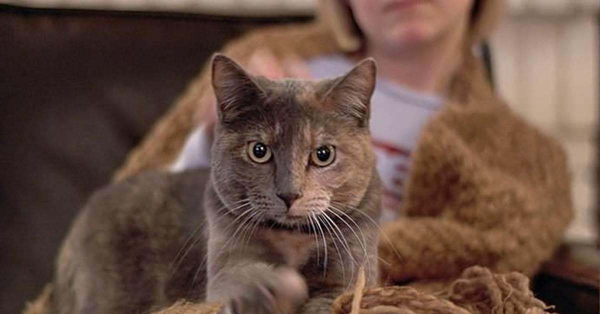 Почему кошки топчут лапками: 8 ответов на один простой вопрос