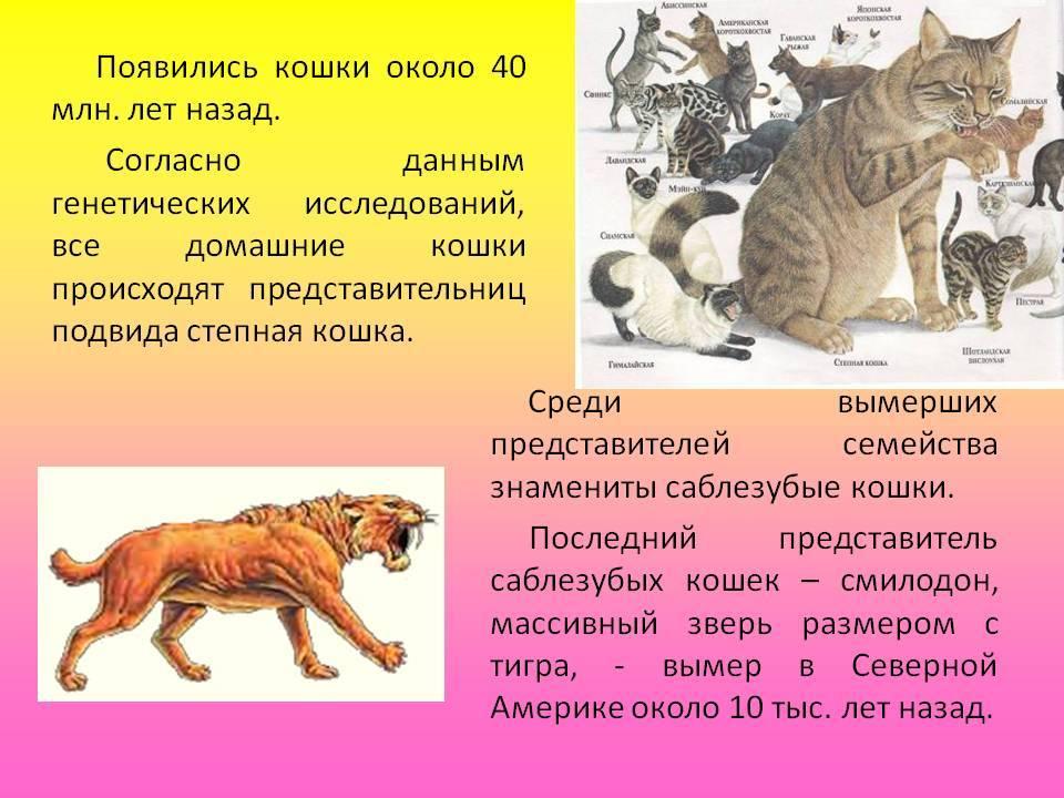 Откуда и когда появились кошки, от кого произошли откуда и когда появились кошки, от кого произошли