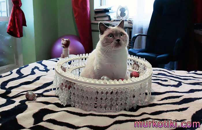 Как отучить кота драть мебель – 12 проверенных способов!