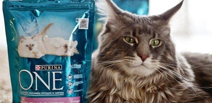 Витамины для беременных кошек: мейн кун, сфинксов, шотландской
