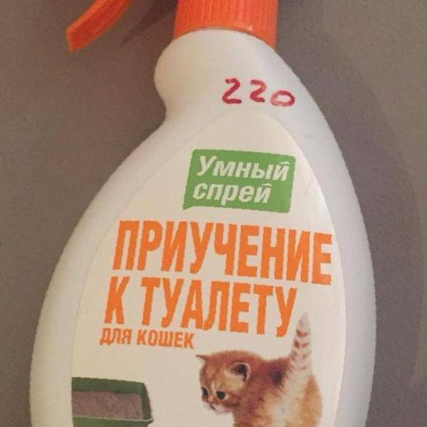 Помогает ли спрей для приучения к лотку котенка. обсуждение на liveinternet