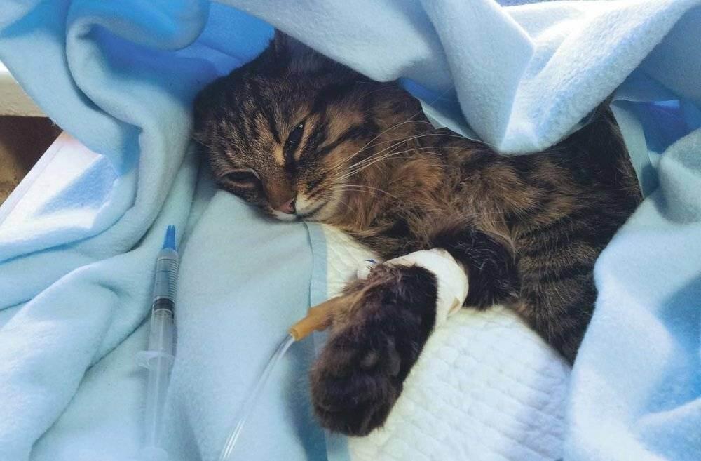 Есть ли душа у кошки, куда она попадает после смерти и может ли дух умершего человека переселиться в животное?
