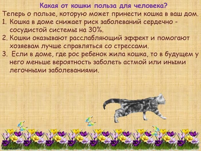 Чем полезны кошки для человека – психологическая польза