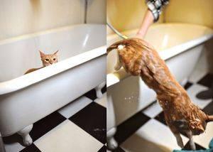 Можно ли купать беременную кошку. десять советов по уходу за беременной кошкой кормление кошки во время беременности