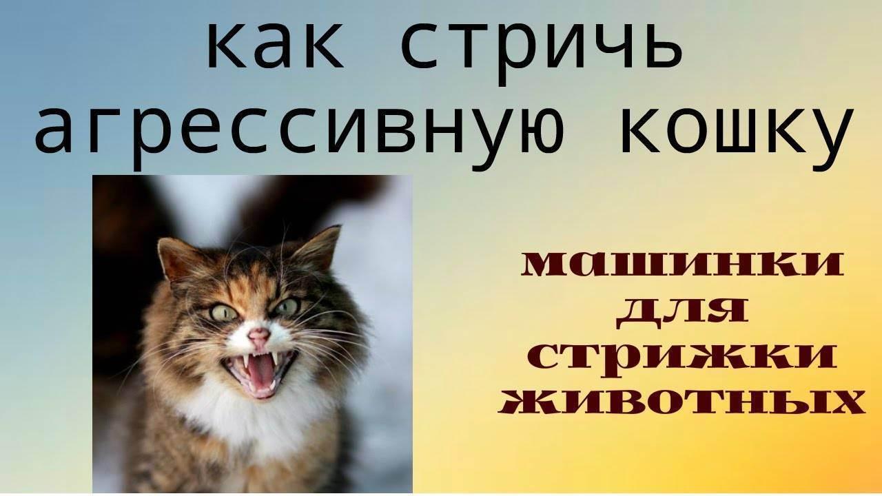 Рекомендации для пресечения агрессии у кошек. агрессивная кошка: что делать и куда бежать