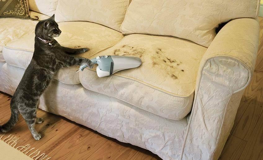 Уборка в доме, где живет кошка. уход за котом: как сохранить чистоту в доме методы борьбы с запахами