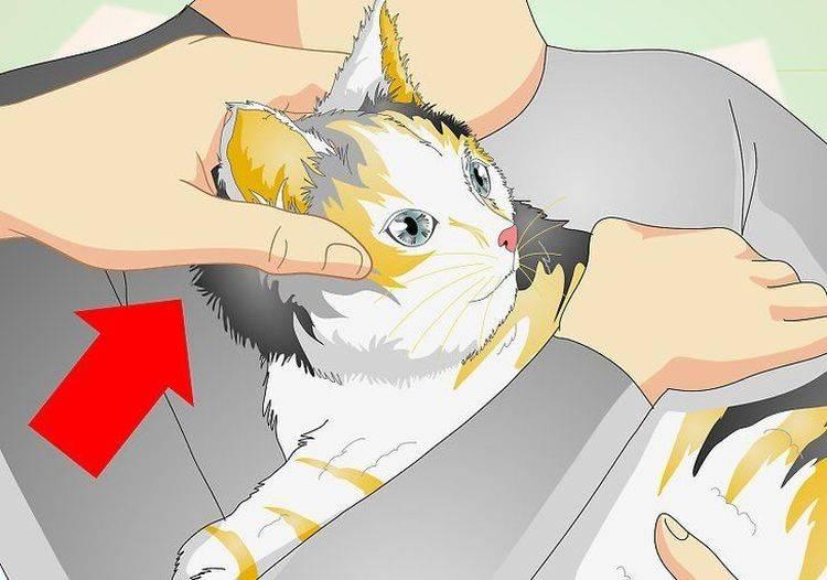 Простая и понятная инструкция, как измерить температуру кошке