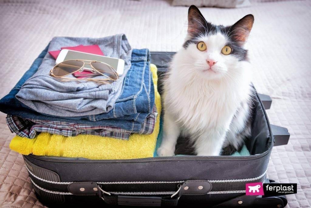 Перевозка кошек в самолёте и в поезде. путешествия с кошками