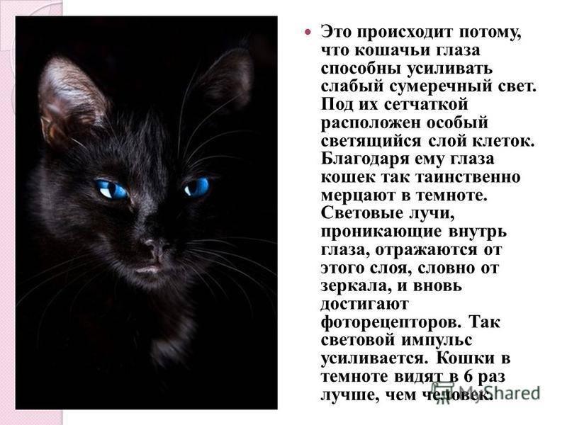 Почему у кошек светятся глаза в темноте?