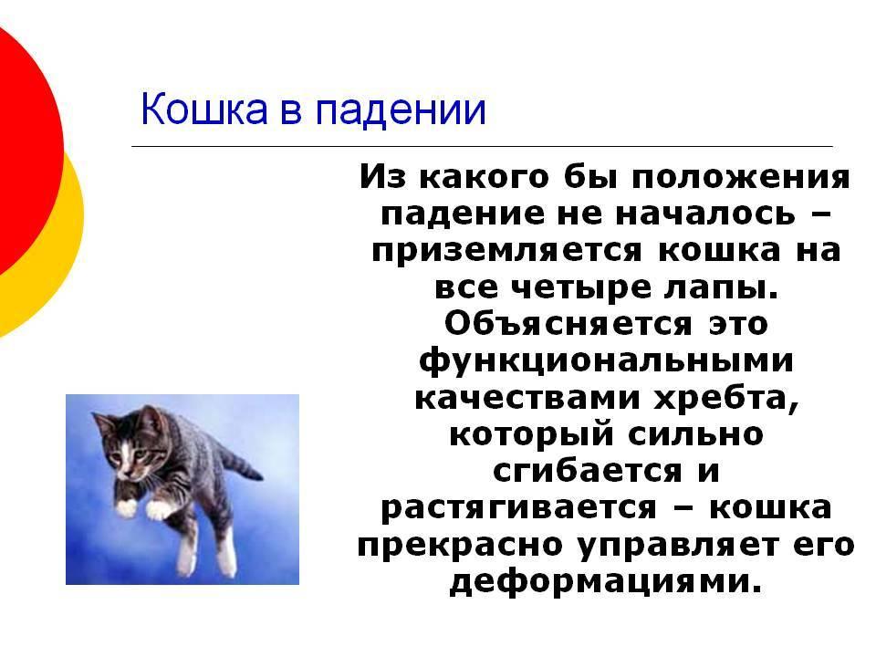 Чем опасные кошки для человека - 6 заболеваний - kotiko.ru
