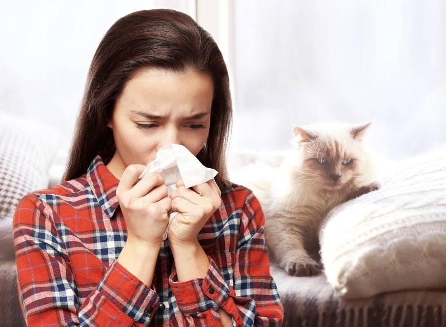 Аллергия у кошек на корм и другие раздражители: симптомы и лечение, особенности протекания заболевания у котенка