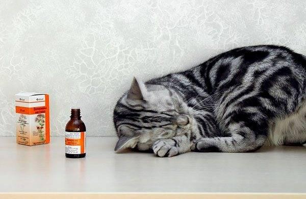 Вредна или полезна валерьянка для кошек?