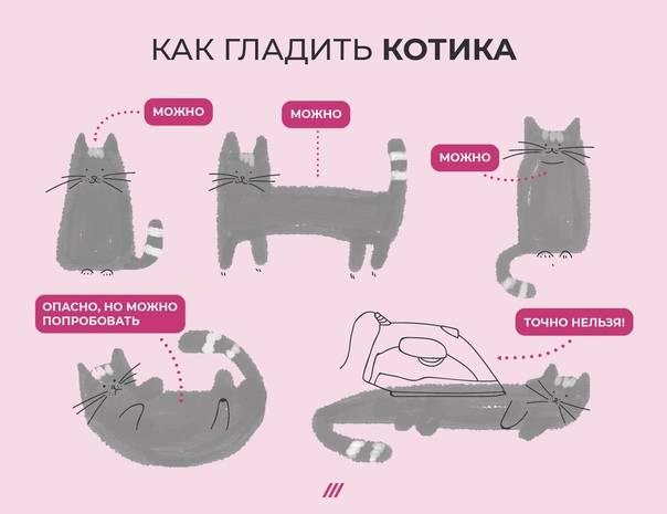 Кто лучше кот или кошка в квартире?