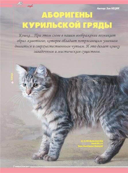Бобтейл курильский (фото): русская короткохвостная кошка - kot-pes