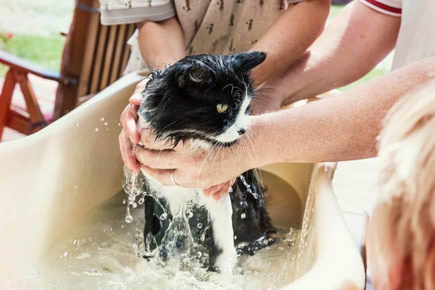 Как купать котенка первый раз: с какого возраста и как часто можно мыть
