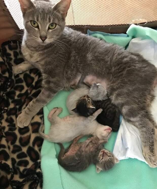 Если кошка беременна: как распознать состояние и помочь питомице
