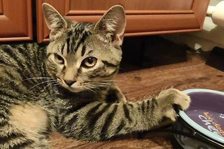 Какие крупы разрешается давать кошкам вместе с мясом или рыбой, можно ли кормить котенка манной кашей?