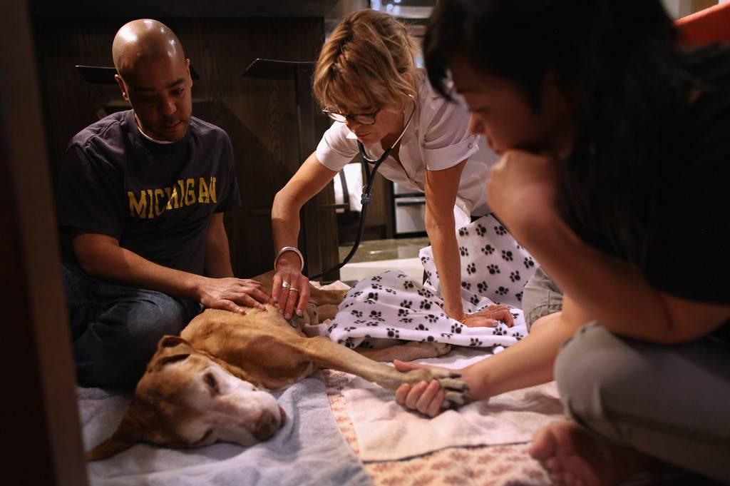 Как происходит усыпление кошек, препараты для усыпления в домашних условиях, кошки после усыпления