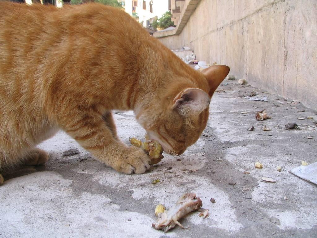 Почему кошка стала вялой, не ест и не пьет несколько дней и постоянно спит — что делать, как лечить питомца?