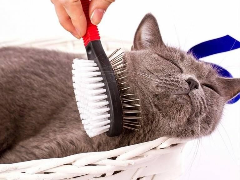 ᐉ как избавиться от шерсти кошки в квартире? - ➡ motildazoo.ru