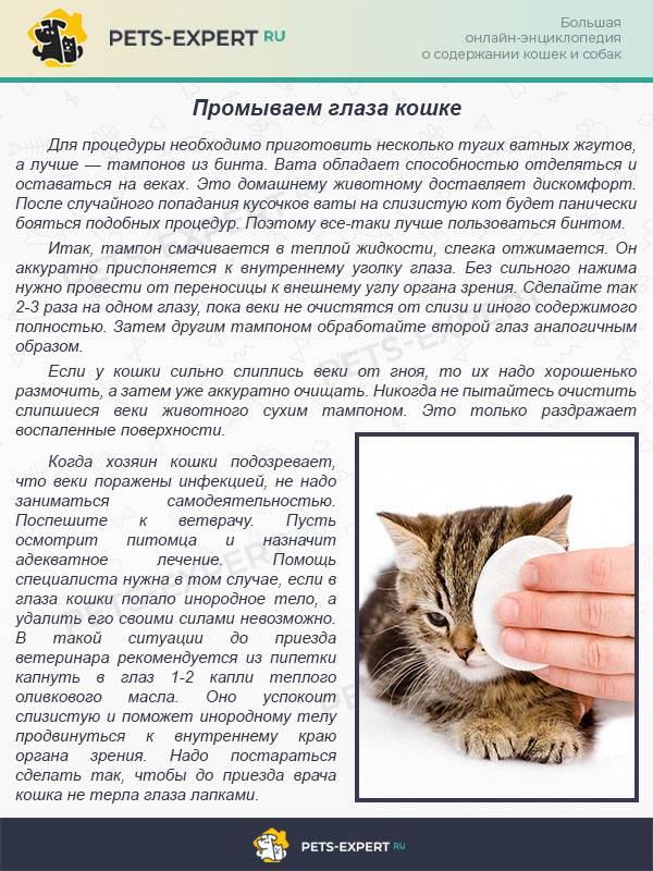 Чем и как промыть глаза котенку | кошке, в домашних условиях
