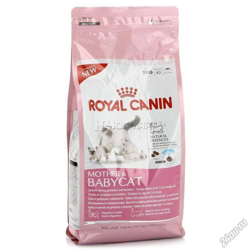 Чем кормить беременную кошку: корм