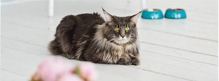 Как проявляется бешенство у кошек