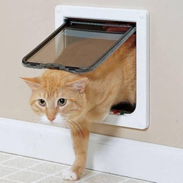 Дверца для кошек в дверь, как сделать своими руками ( врезная, люк, лаз).