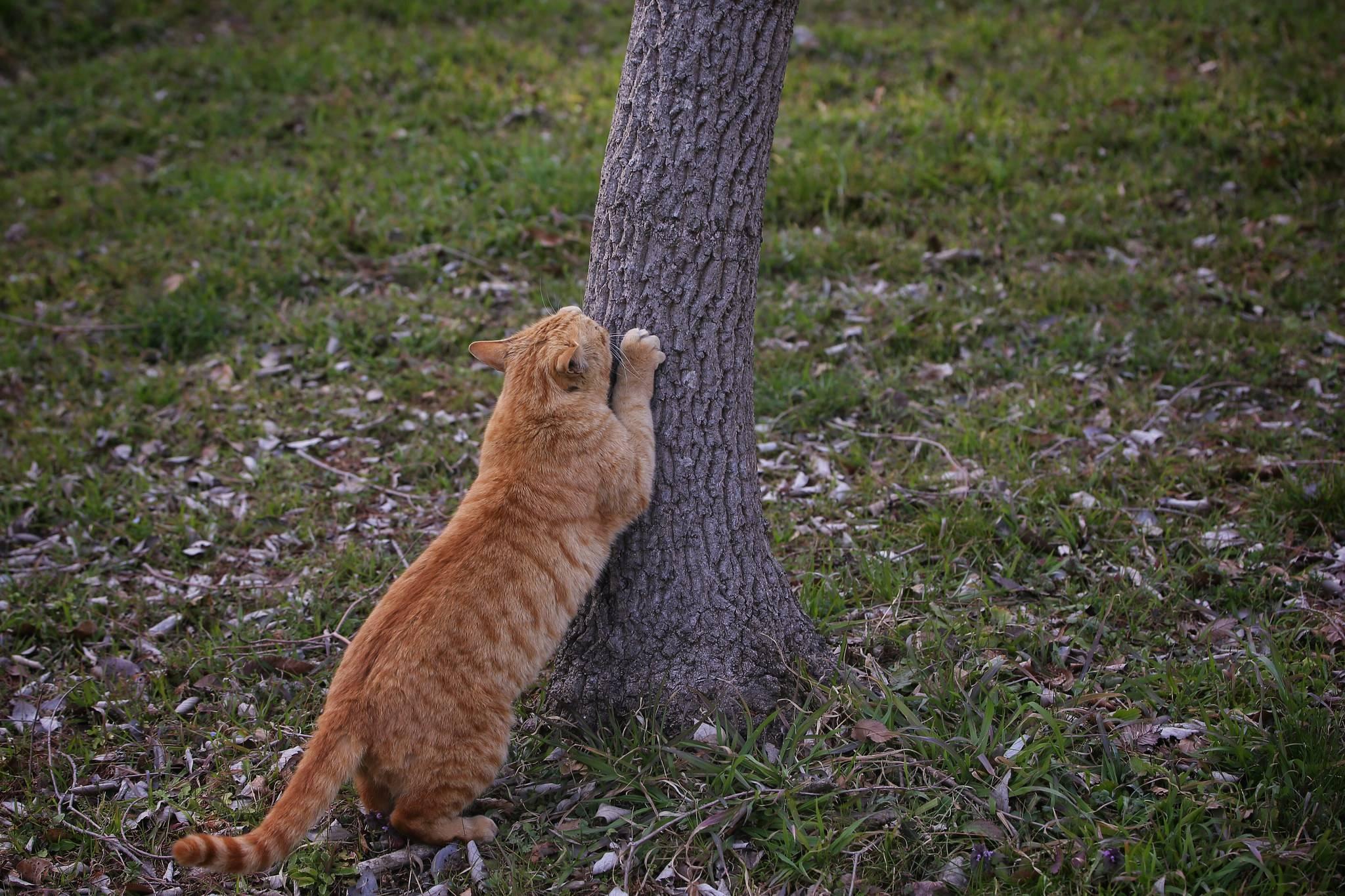 Какую когтеточку выбрать для кошки
