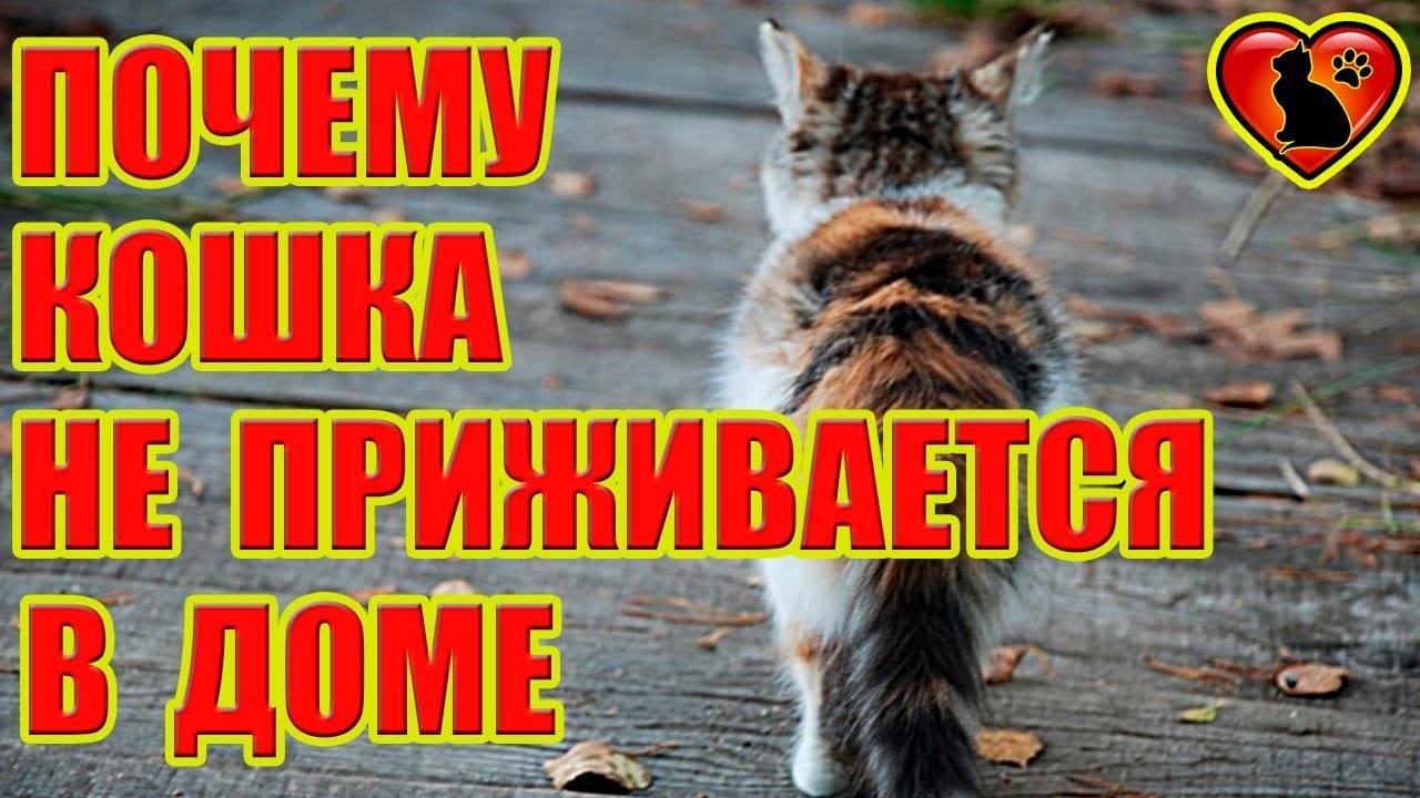 Почему в доме не живут кошки? - спроси у бывалых - страна мам