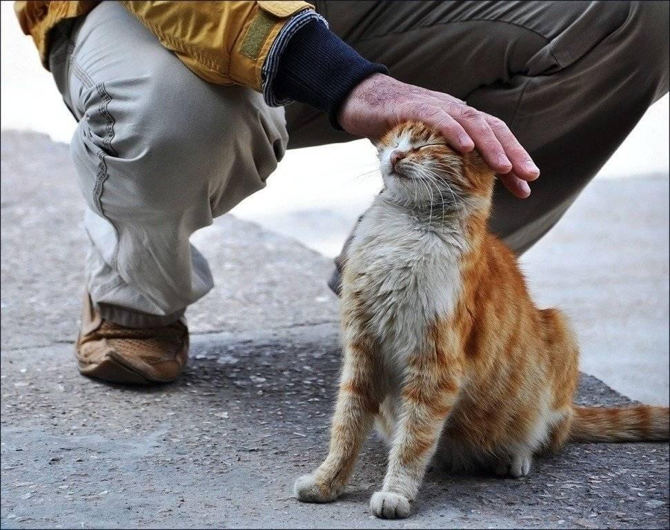 Как поймать кота на улице который боится людей
