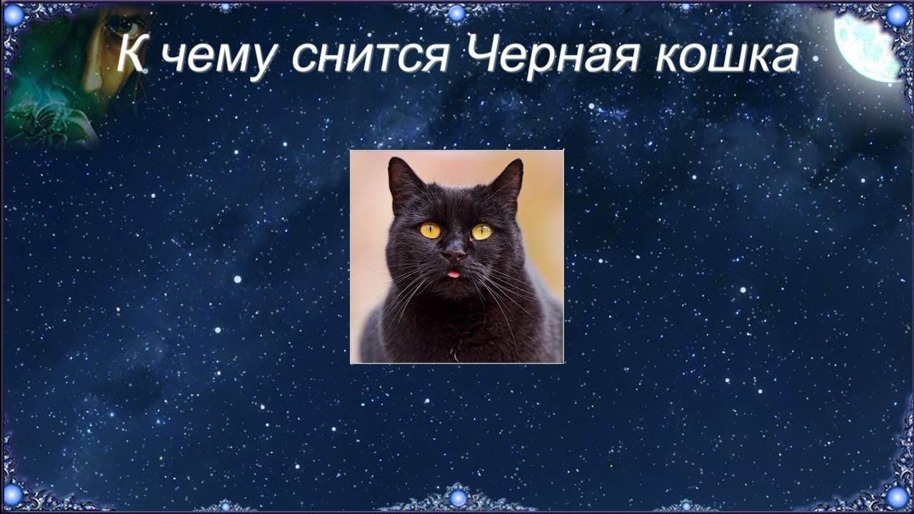 Сонник черная кошка ласкается. к чему снится черная кошка ласкается видеть во сне - сонник дома солнца