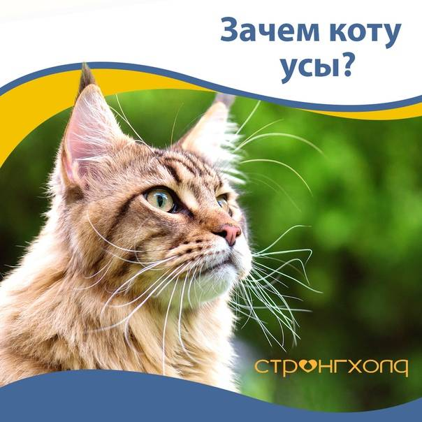 Зачем кошке нужны усы?