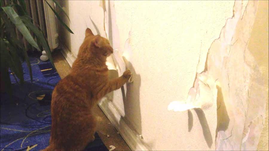 Кот гадит у входной двери: что делать, почему происходит