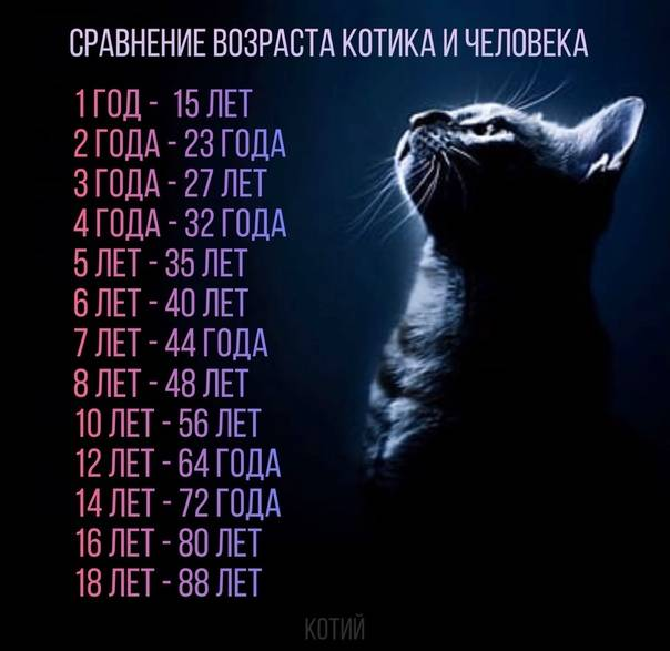 Возраст кошки по человеческим меркам: калькулятор расчёта в зависимости от размера животного, таблица