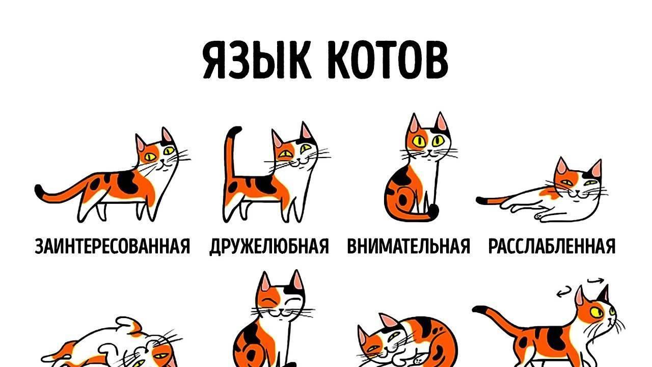 Как научить кота разговаривать? правила обучения животных человеческой речи