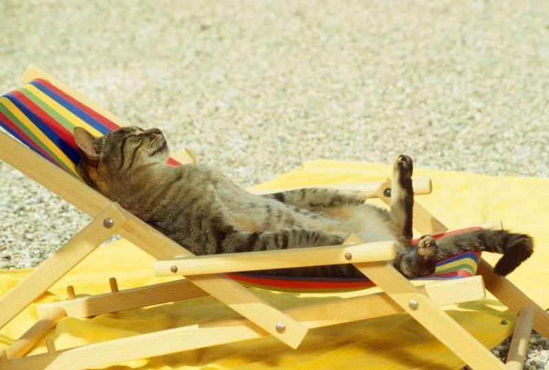 Тепловой удар у собаки. солнечный, тепловой удар у собаки, кошки, что делать, профилактика что делать если собака получила тепловой удар