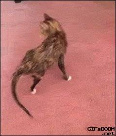 Почему кот или кошка дергает или трясет хвостом