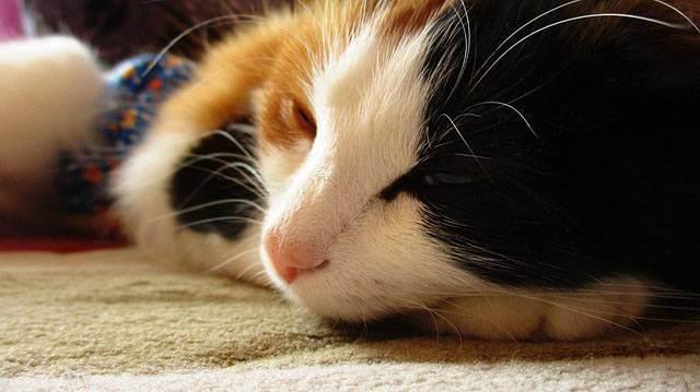 Жизнь без боли и стресса. кошки