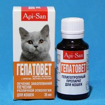 Ветеринарный препарат «гепатовет»: как применять для кошек